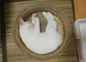 ただ寝てるだけですけど…